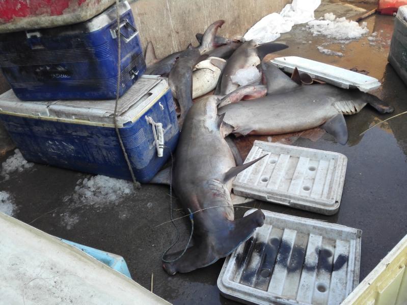 صور.. أسماك متعفنة وروائح كريهة وعمالة وافدة بسوق جازان