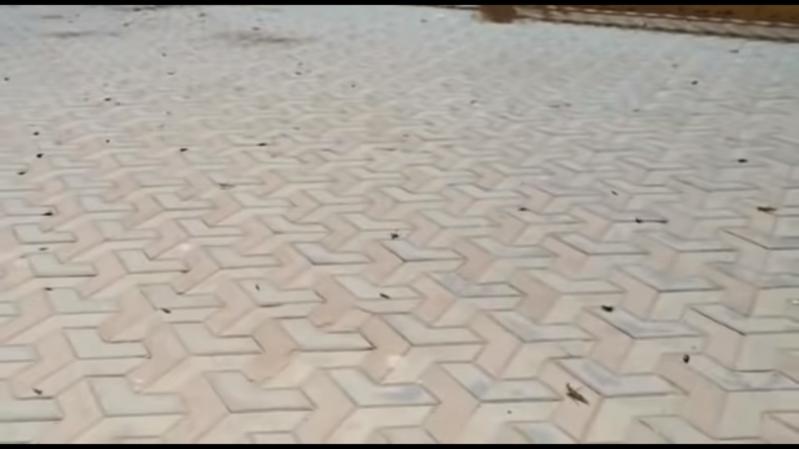 فيديو.. الجراد يهاجم منتزه الردف في الطائف ويفترش أرضيته وحوائطه