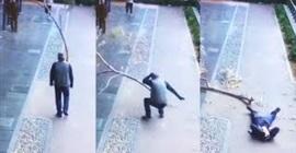 فيديو مروع.. لحظة سقوط فرع شجرة على رأس عجوز - المواطن