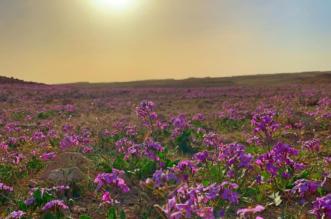 الزعاق: موسم الربيع يبدأ بعد 13 يوماً - المواطن