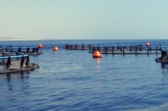 البيئة تطلق خدمة دعم شركات الاستزراع السمكي إلكترونيًا - المواطن