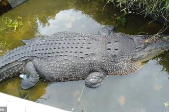 فيديو.. تمساح ضخم يلتهم امرأة حية في إندونيسيا - المواطن