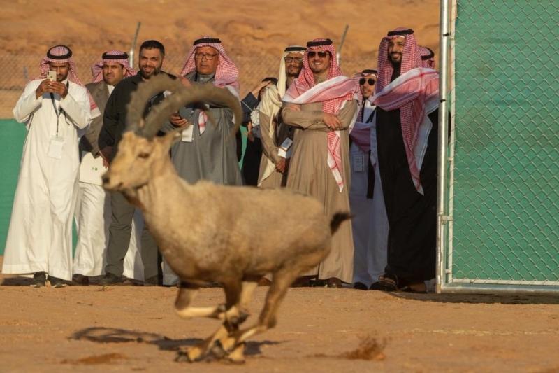 الأمير محمد بن سلمان يطلق محمية شرعان الطبيعية ضمن رؤية العلا - المواطن