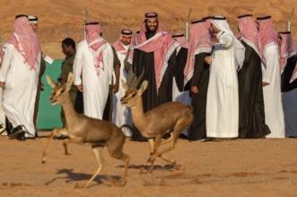 فيديو.. لحظة إطلاق محمد بن سلمان محمية شرعان الطبيعية في العلا - المواطن