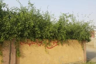 الأشجار تحاصر مقبرة قرية مجعر بصامطة.. والثعابين تغزو المنازل - المواطن