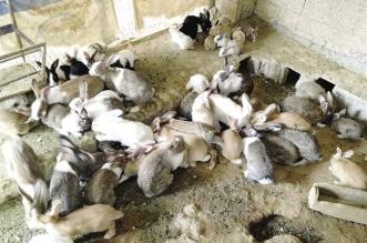 متهور يقتل 10 آلاف أرنب في 4 دقائق - المواطن
