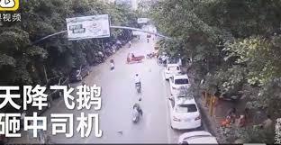 فيديو.. طائر يتسبب في سقوط مروع لامرأة من فوق دراجتها - المواطن