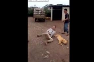فيديو.. تحطيم عظام لص سرق كلبًا وقتله لبيعه - المواطن