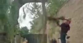 فيديو.. قطع شجرة فتلقى عقابًا قاسيًا منها! - المواطن