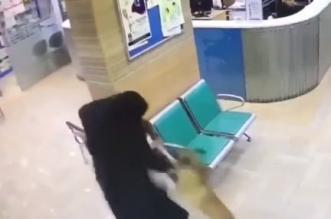 فيديو.. امرأة شجاعة تنقذ طفلتها من هجوم كلب بإحدى المناطق - المواطن