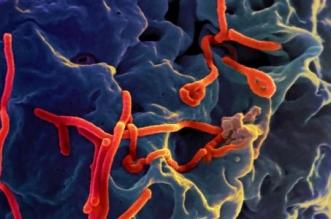 حالة طوارئ صحية بسبب إيبولا - المواطن
