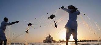 البيئة تعلن بدء موسم حظر صيد أسماك الباغة وتتوعد المخالفين بالعقوبة - المواطن