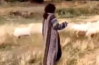 فيديو.. أحلام ترعى الأغنام في ربوع أبها - المواطن
