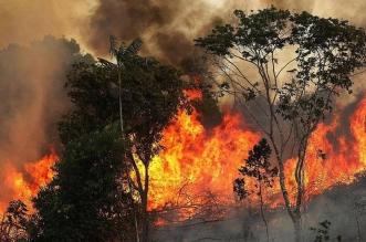 العلاقة بين حرائق الأمازون ولحوم البقر - المواطن