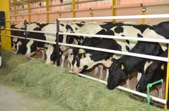 الإحصاء: إنتاج 2.07 مليار لتر حليب أبقار و224 مليون بيضة خلال عام - المواطن