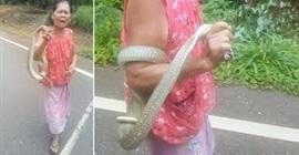 لقطات مرعبة لمسنّة تحمل ثعبان كوبرا بيديها العاريتين - المواطن