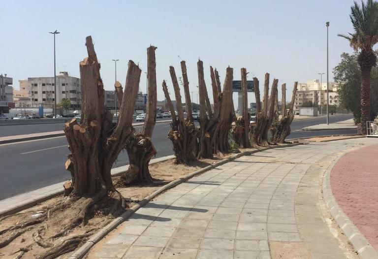 تقزيم الأشجار.. مجزرة مستمرة تحت عين البلديات