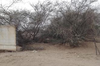 مقبرة قائم الصملة في جازان مكشوفة وبدون سور! - المواطن