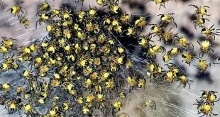 فرنسا تحبط تهريب 100 عنكبوت