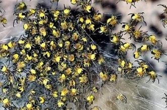 فرنسا تحبط تهريب 100 عنكبوت - المواطن