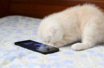 قط يورط صاحبته بإرسال صورة فاضحة - المواطن