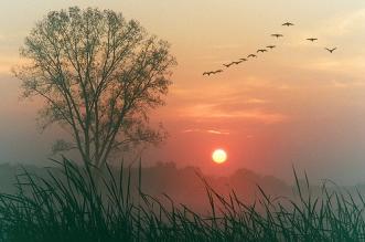 sunrise autumn 5001