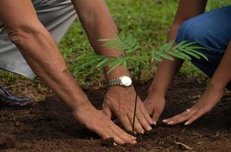 مبادرة لغرس 100 ألف شجرة في المدينة المنورة - المواطن