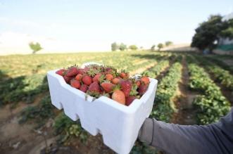 مشروعات تنموية متجددة تنعش قطاع الزراعة في عسير 1