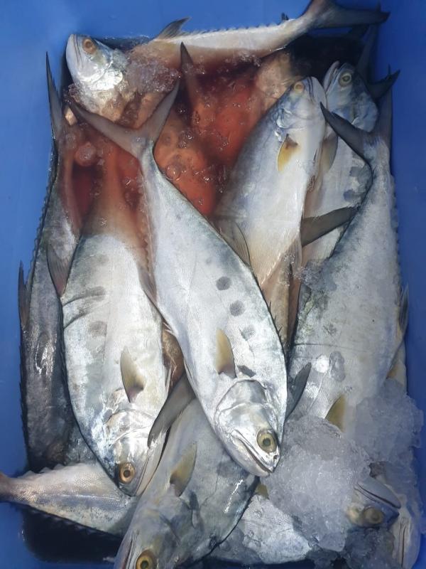 مصادرة 129 كجم أسماك و40 كجم روبيان فاسد في الرس - المواطن