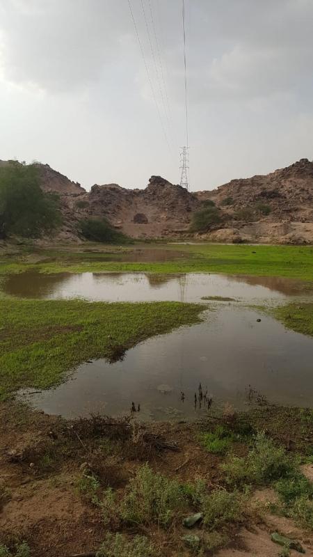 شاهد بالصور.. أمطار الخير في عسير - المواطن