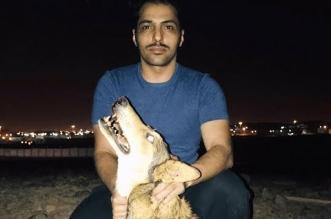 فيديو.. شاب يقتـل ذئباً أثار الذعر في المدينة المنورة - المواطن