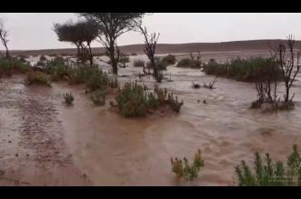 مطر وسيول وجمال.. لقطات من أمطار اليوم - المواطن
