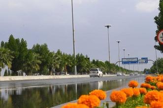 جمال الأجواء بعد أمطار تبوك - المواطن