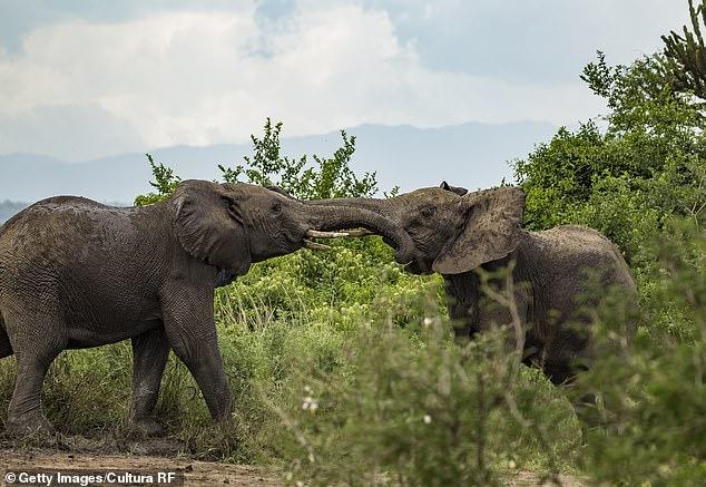 فيل غاضب يُنهي حياة مصور بطريقة مؤلمة