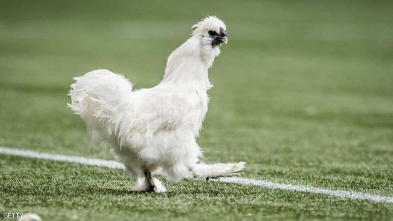 مقاضاة لاعب كرة بسبب دجاجة!