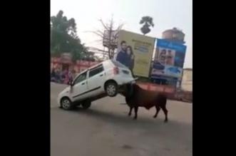 فيديو.. هذا ما فعله ثور هائج في سيارة - المواطن