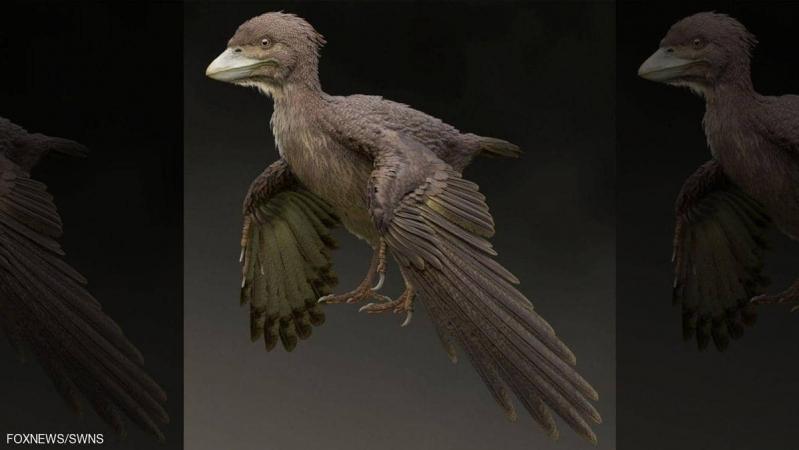 العثور على أحفورة طائر لا يطير!