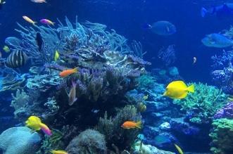 فيديو.. سمكة تشبه البشر بـ191 ألف ريال - المواطن