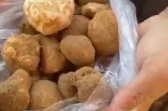 فيديو.. بشائر الفقع تظهر في حفر الباطن - المواطن