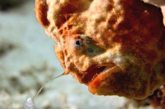 فيديو.. سمكة مرعبة تبتلع أخرى بسرعة البرق - المواطن