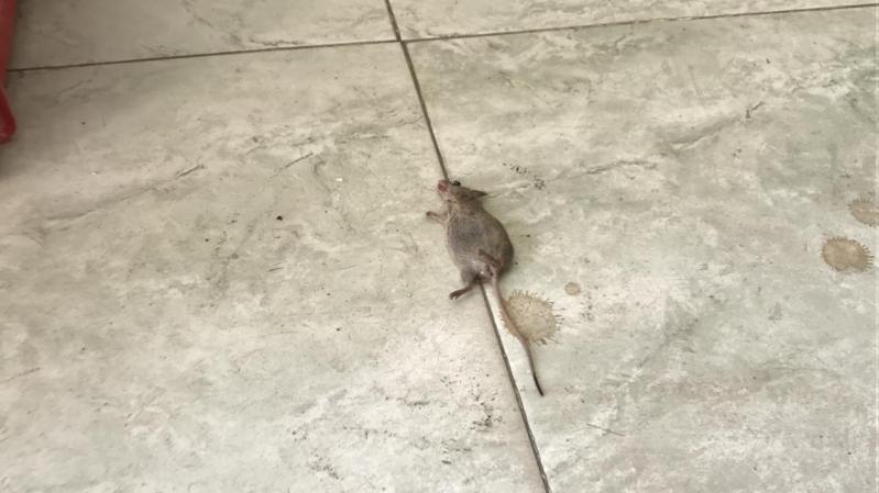فئران في مخبز بوادي الدواسر!