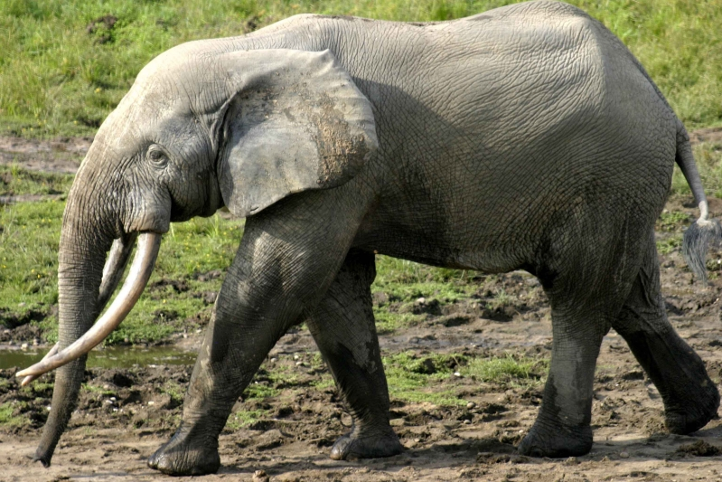 فيل غاضب يقتل امرأتين ويصيب أربعة