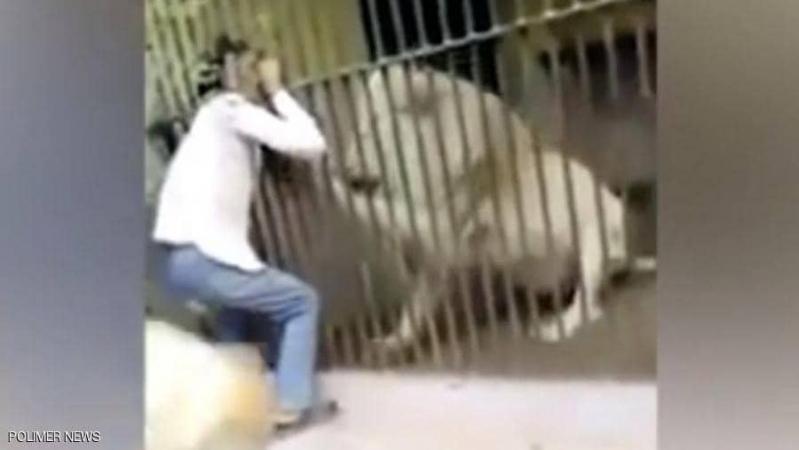 فيديو مروع.. أسد ينهش ذراع حارسه
