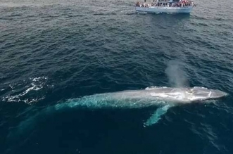 مصر توضح حقيقة ظهور الحوت الأزرق في الساحل الشمالي - المواطن