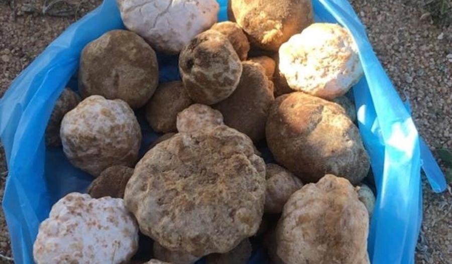 مواطن يكشف مواقع ظهور الفقع في حفر الباطن