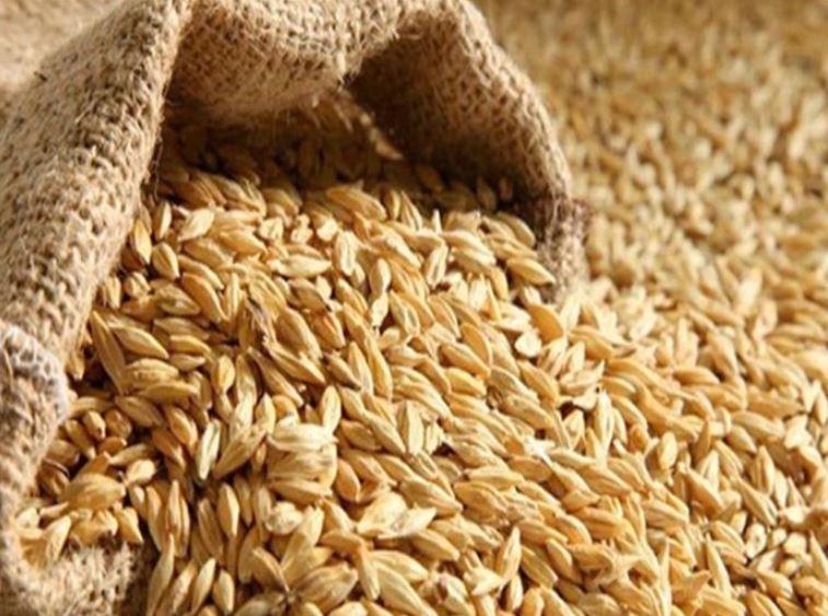 مؤسسة الحبوب تطرح مناقصة لاستيراد 720 ألف طن شعير