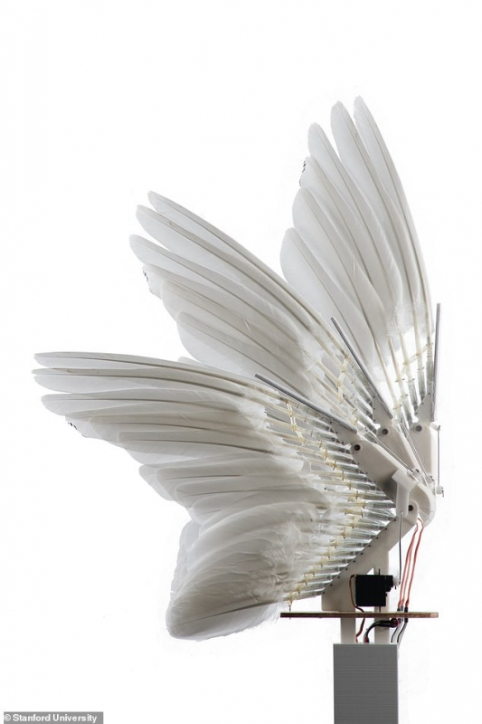 صور.. علماء يبتكرون أجنحة طائرات بريش حقيقي - المواطن