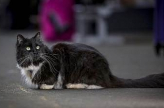 سقوط سفاح القطط البريطاني! - المواطن