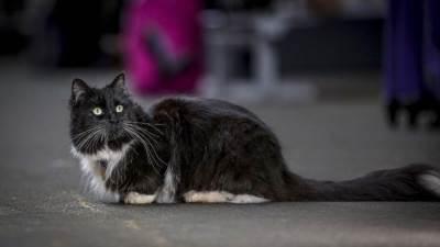 سقوط سفاح القطط البريطاني!