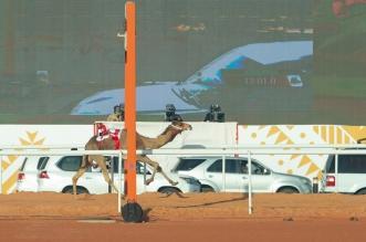 لقطات من ختام مهرجان الابل